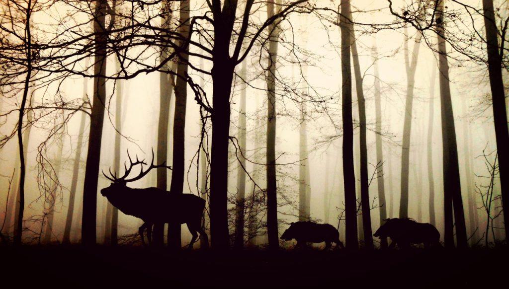 terug naar de natuur
